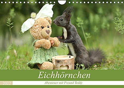 Eichhörnchen - Abenteuer mit Freund Teddy (Wandkalender 2022 DIN A4 quer)