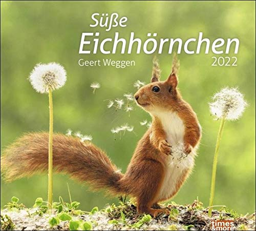 Eichhörnchen Bildkalender 2022 - times&more Tier-Kalender - Wandkalender mit Monatskalendarium - 30 x 27 cm