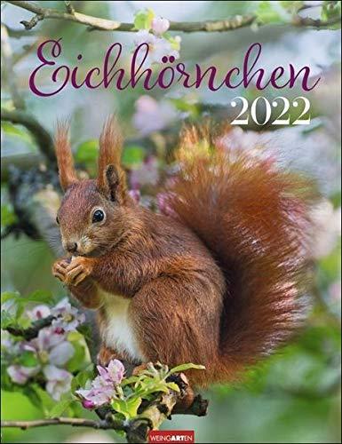 Eichhörnchen Kalender 2022 - Tierkalender - Wandkalender mit Monatskalendarium - Planer mit Platz zum Eintragen - 12 Farbfotos - 30 x 39 cm