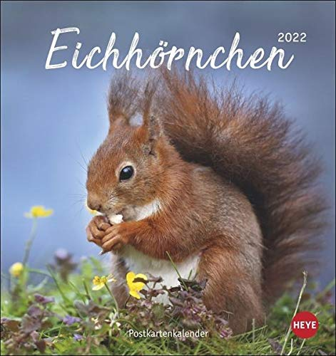Eichhörnchen Postkartenkalender 2022 - Tierkalender mit perforierten Postkarten - zum Aufstellen und Aufhängen - mit Monatskalendarium - 16 x 17 cm