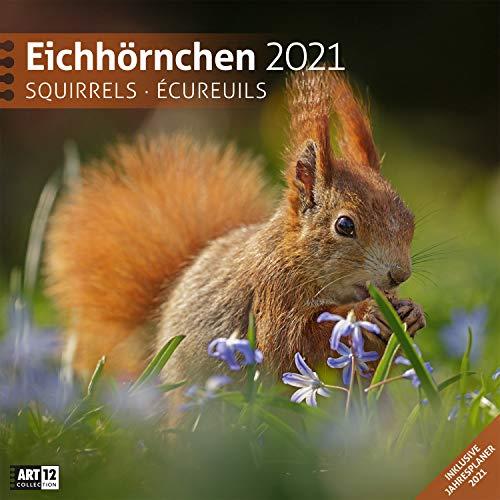 Eichhörnchen 2021, Wandkalender / Broschürenkalender im Hochformat (aufgeklappt 30x60 cm) - Geschenk-Kalender mit Monatskalendarium zum Eintragen