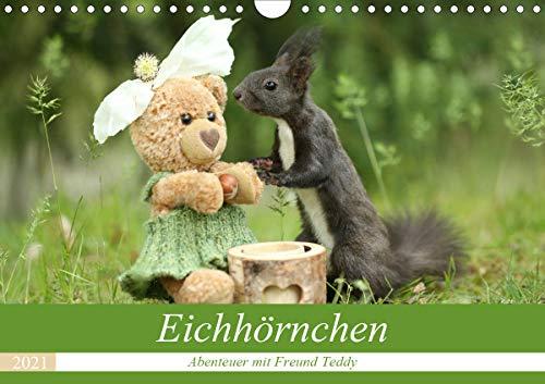 Eichhörnchen - Abenteuer mit Freund Teddy (Wandkalender 2021 DIN A4 quer)